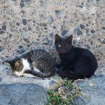 猫島に行ったら猫以外の写真でフォルダがあふれかえった話。